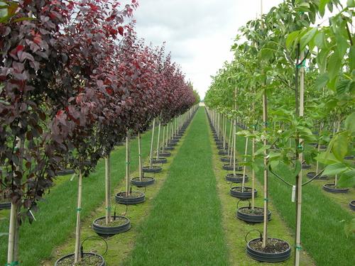 Plants Trees Nursery