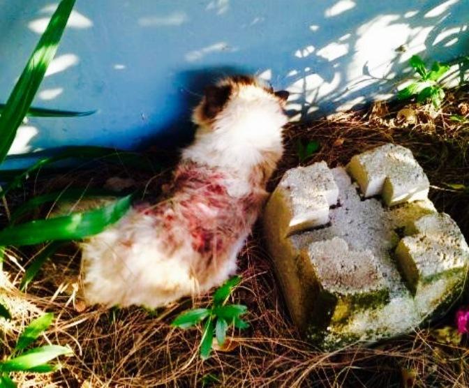 Mitzi the Cat attacked in Pompano Beach.