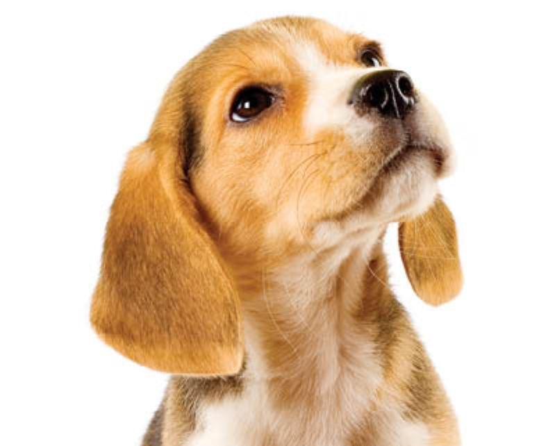Galuppis Puppies Pompano Beach Restaurants Events